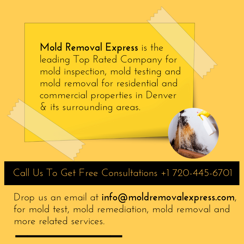 Mold Removal specialist   Cleaning black mold