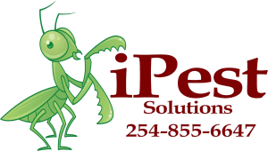 Residential, commercial pest control services in Waco, Texas