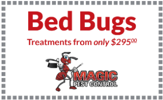 Bed Bugs control treatment from $295 – Magicpest.com