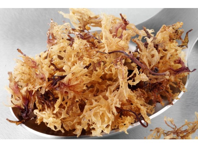Get the high-quality Sea Moss from our Store