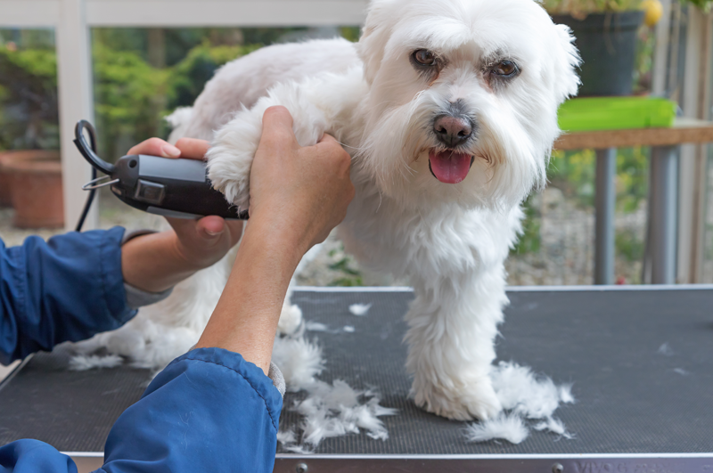 Learn How To Become A Dog Groomer