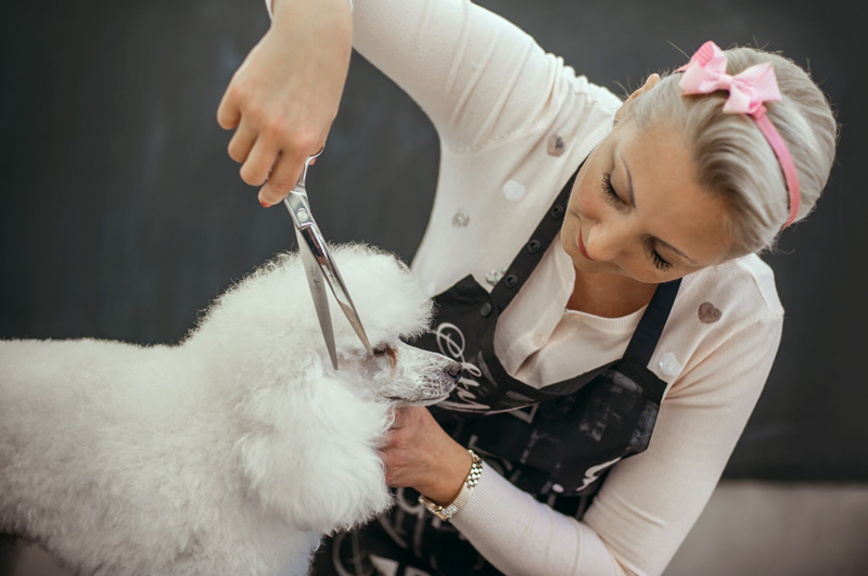 Avail Courses For Dog Grooming Online