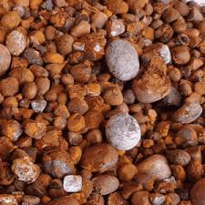 Buy Dry Seahorse-  A trusted store to buy quality  cow gallstones