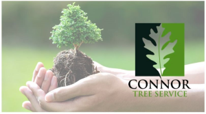 Seeking Pro Tree Service? Contact Connor Tree Service