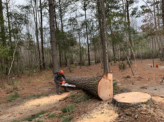 Connor Tree Services – Trusted Tree Removal Service North Charleston